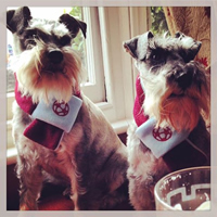 Harry And Stanley Westham Scarves